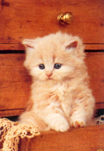 Petit chat - Image de petit chat ...